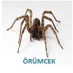 örümcek ilaçlama hizmeti