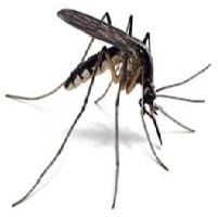 Sivrisinek İlaclama