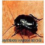 amerikan hamam böceği ilaçlama hizmeti