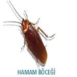 hamam böceği ilaçlama hizmeti